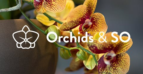 Orchids & So is live!